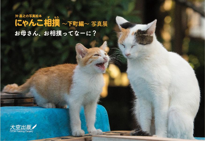 「沖昌之の写真絵本 にゃんこ相撲~下町編~」の発売を記念し、写真展の開催が決定!
